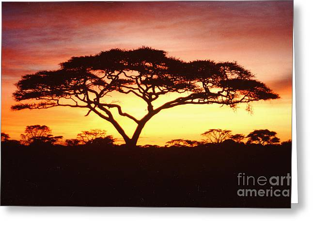 Jerome Stumphauzer Greeting Cards - Tree of Life Africa Greeting Card by Jerome Stumphauzer