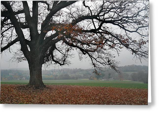 Tree On A Hill Greeting Card by Gordon Beck