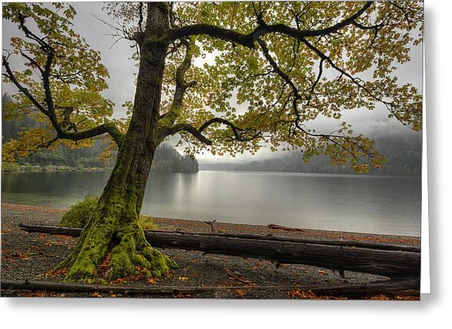 Tree On Cameron Lake Greeting Card by Mark Kiver
