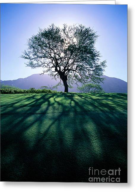 Tree On Grassy Knoll Greeting Card by Carl Shaneff - Printscapes