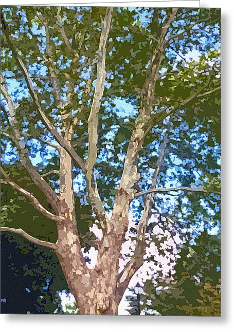 Tree On The Common Greeting Card by Jean Hall