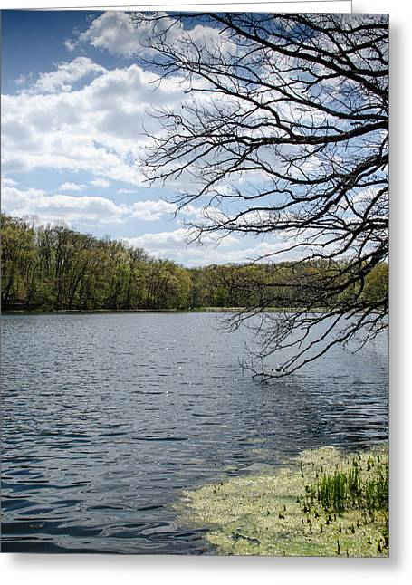 Amy Turner Greeting Cards - Tree over water Greeting Card by Amy Turner