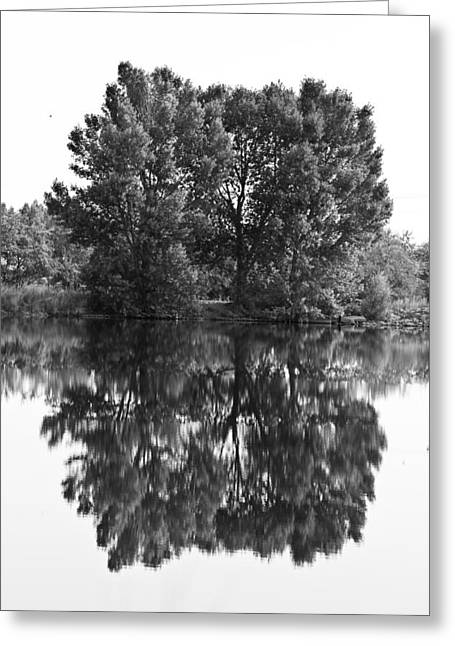 Striking Images Greeting Cards - Tree Reflection in Black and White Greeting Card by James BO  Insogna
