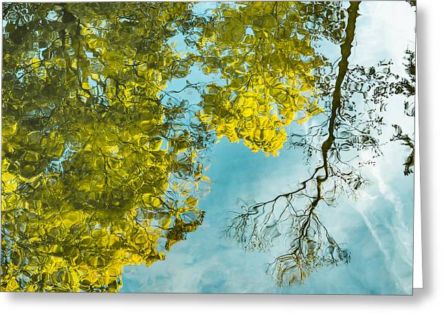 Reflecting Water Greeting Cards - Tree Reflections Greeting Card by Heather Pugh