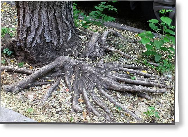 Tree Roots Drawings Greeting Cards - Tree Root Design Greeting Card by Nina Kuriloff