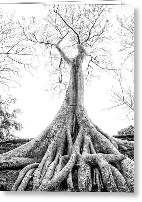 Tree Roots Greeting Cards - Tree Roots Cambodia Angkor Wat Greeting Card by Cory Dewald