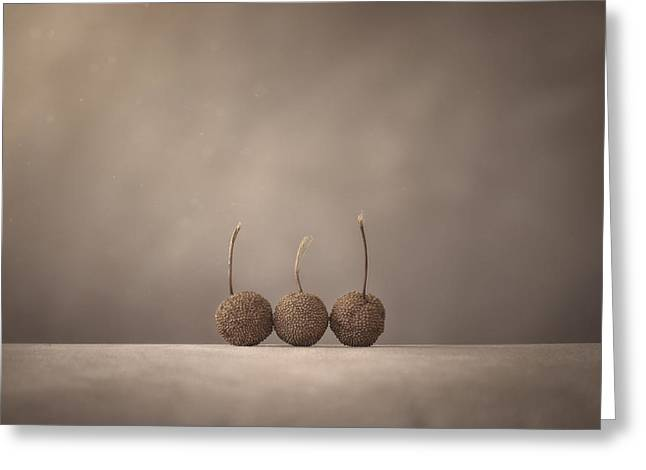 Tree Seed Pods Greeting Card by Scott Norris