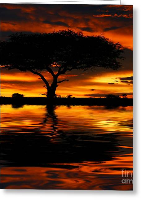 Peaceful Scenery Photographs Greeting Cards - Tree silhouette and dramatic sunset Greeting Card by Anna Omelchenko