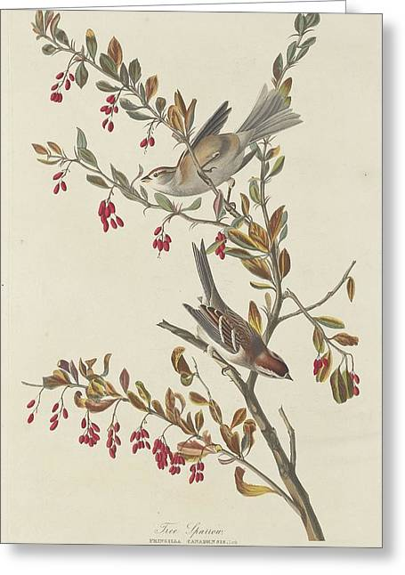 Sparrow Greeting Cards - Tree Sparrow Greeting Card by John James Audubon
