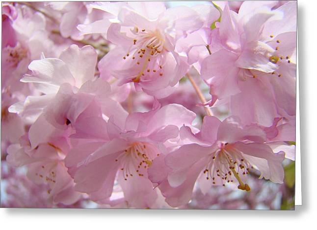 Tree Spring Pink Flower Blossoms art print Baslee Troutman Greeting Card by Baslee Troutman