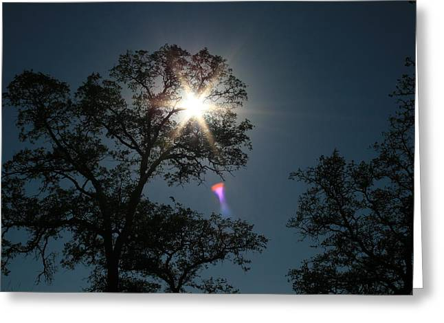 Tree Star Greeting Card by Joshua Sunday