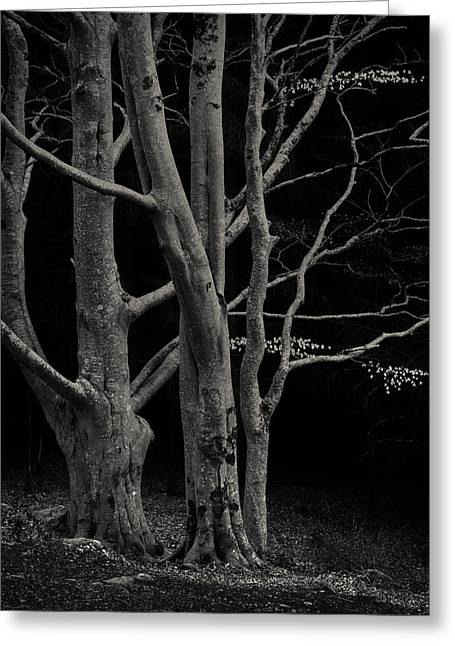 Beech Tree Greeting Card by Dave Bowman