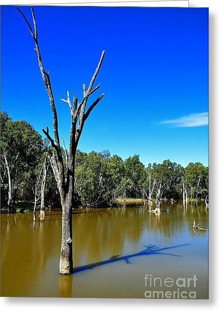 Reflections In River Greeting Cards - Tree Stumps in Beauty Greeting Card by Kaye Menner