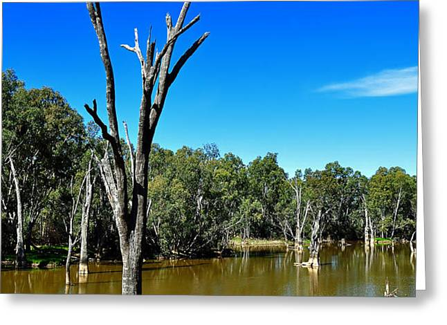 Tree Stumps in Beauty Greeting Card by Kaye Menner