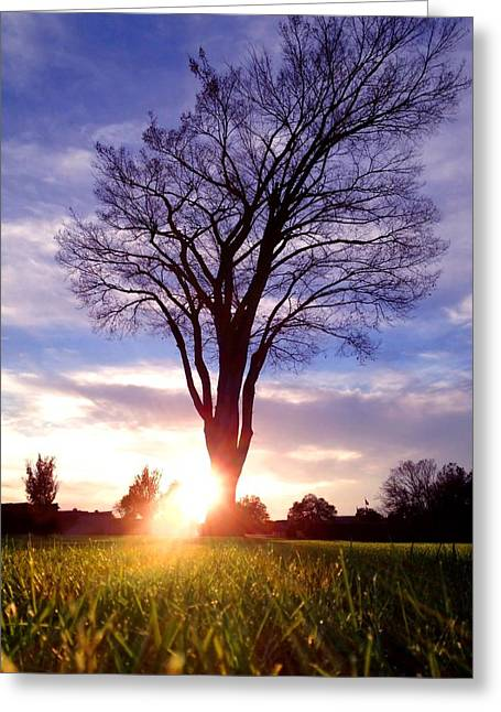 Charlotte Mixed Media Greeting Cards - Tree Sun Lit Greeting Card by Morgan Carter