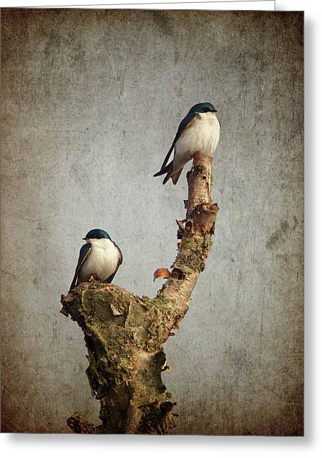 Swallow Photographs Greeting Cards - Tree Swallows Greeting Card by Al  Mueller