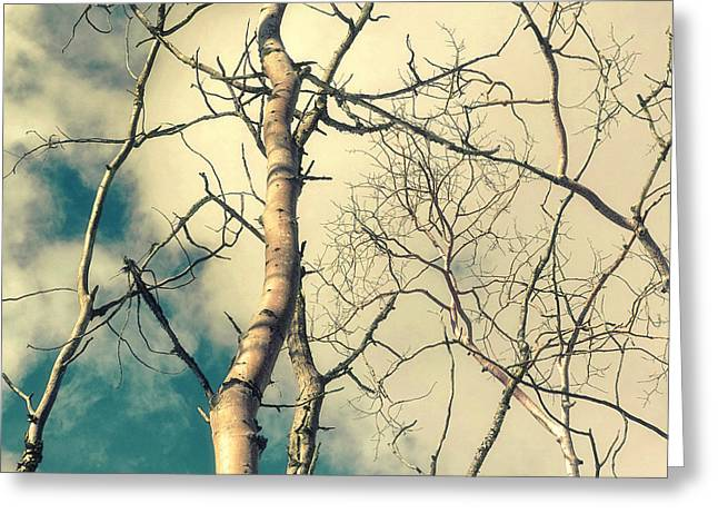 Tree Limbs Greeting Cards - Tree Top 2 Greeting Card by Priska Wettstein