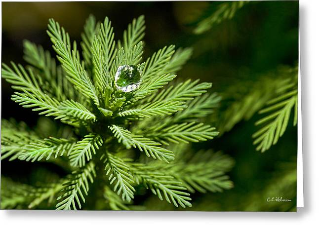 Christopher Holmes Greeting Cards - Tree Top Dew Drop Greeting Card by Christopher Holmes