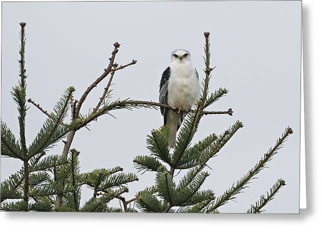 Tree Topper Greeting Card by Loree Johnson