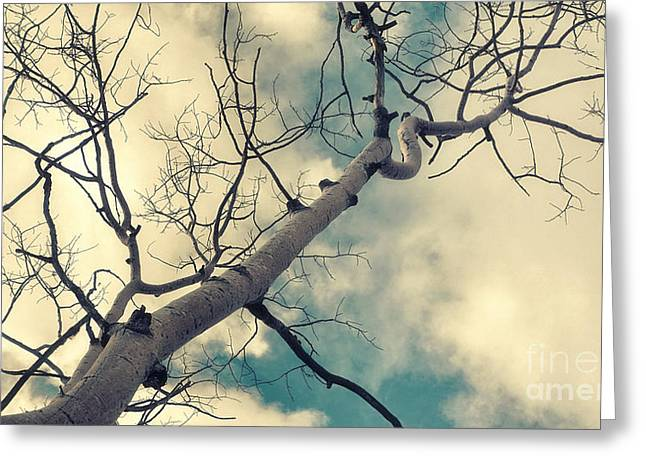 Tree Limbs Greeting Cards - Tree Tops 1 Greeting Card by Priska Wettstein