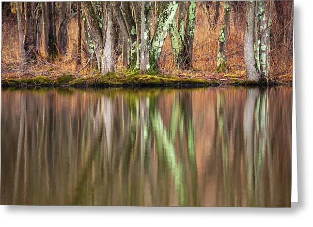 Tree Trunks Reflecting Greeting Card by Karol Livote