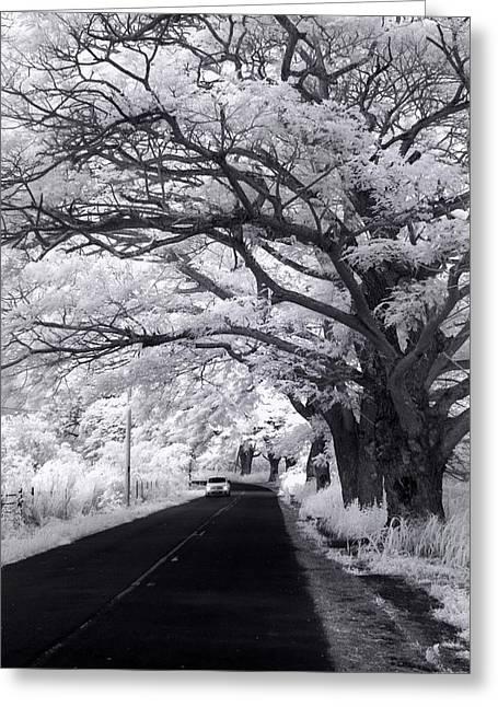 Tree Tube - Vert Greeting Card by Sean Davey