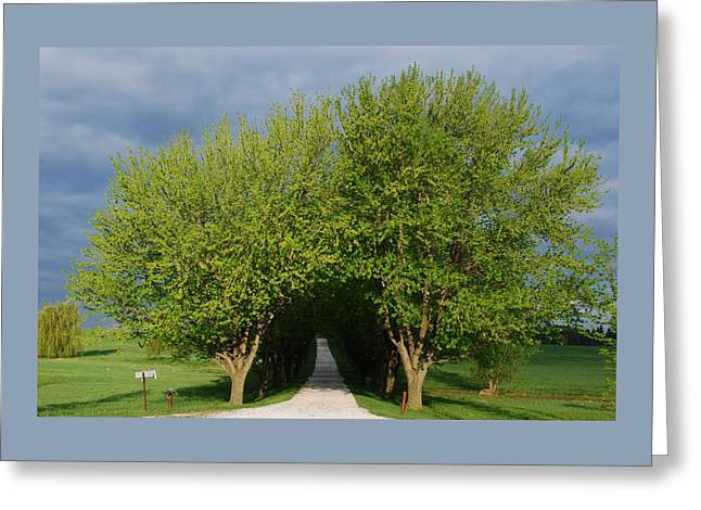 Charlotte Greeting Cards - Tree Tunnel Driveway Greeting Card by Bill Driscoll