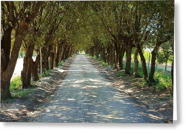 Tree Tunnel Greeting Card by Valentino Visentini