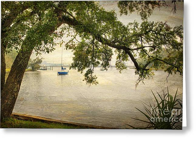 Mississippi Gulf Coast Greeting Cards - Tree with a View Greeting Card by Joan McCool