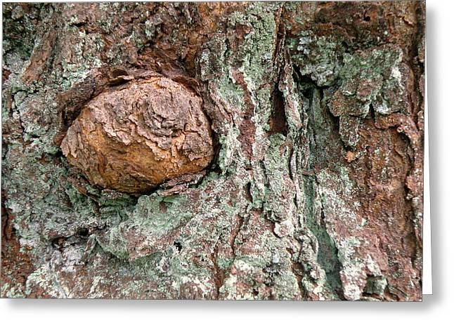 Moss Greeting Cards - Tree with Burl and Lichen Greeting Card by Jean Hall