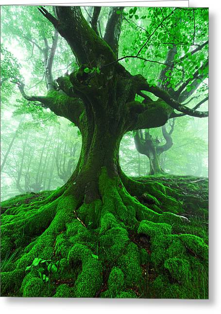 Pais Vasco Greeting Cards - Tree With Twisted Roots In Foggy Forest Greeting Card by Mikel Martinez de Osaba