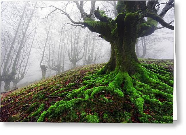 Pais Vasco Greeting Cards - Tree With Twisted Roots Greeting Card by Mikel Martinez de Osaba