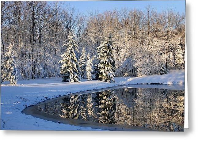 Trees Reflecting In Water Greeting Cards - Treeflections Greeting Card by Kristin Elmquist