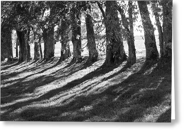 Black And White Photos Greeting Cards - Treeline Greeting Card by Amy Tyler