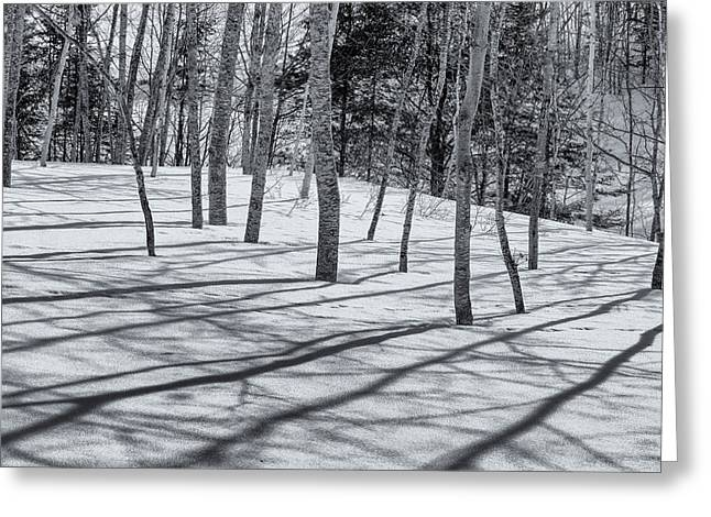 Winter In Maine Greeting Cards - Trees And Shadows Greeting Card by Tom Singleton