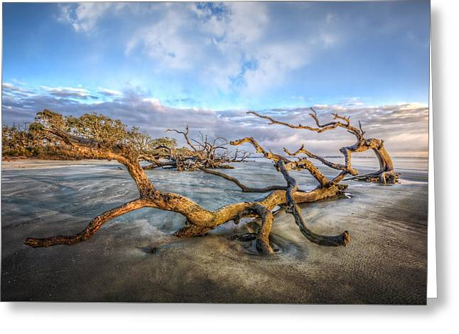 Beach Greeting Cards - Trees at Dawn Greeting Card by Debra and Dave Vanderlaan
