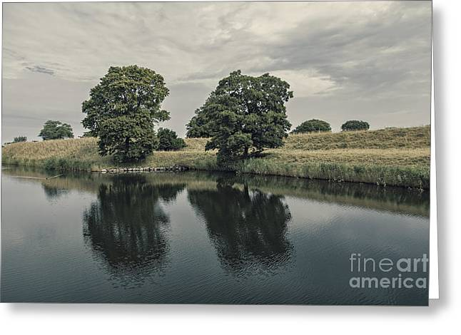 River View Greeting Cards - Trees at dawn Greeting Card by Sophie McAulay