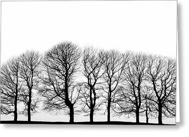 Black Top Greeting Cards - Trees at Middleton Top Greeting Card by Phil Searle