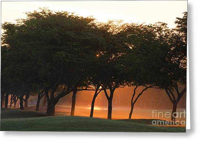 Mystical Landscape Mixed Media Greeting Cards - Trees at Sunrise - Golf Course Series Greeting Card by Anahi DeCanio - ArtyZen Studios