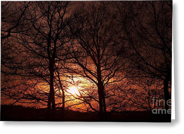 Gloaming Greeting Cards - Trees At Sunset Greeting Card by Michal Boubin