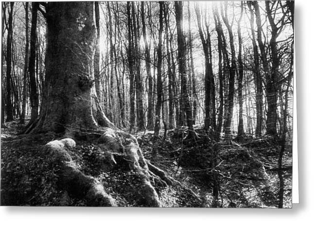 Trees at the entrance to the Valley of No Return Greeting Card by Simon Marsden