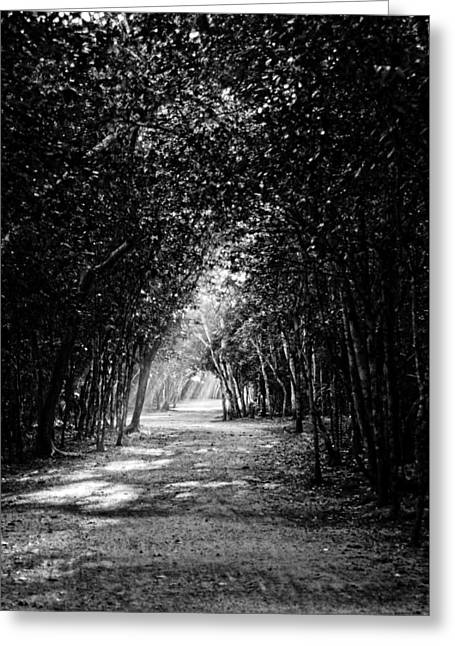 Black And White Photos Pyrography Greeting Cards - Trees Greeting Card by Baptiste Riethmann