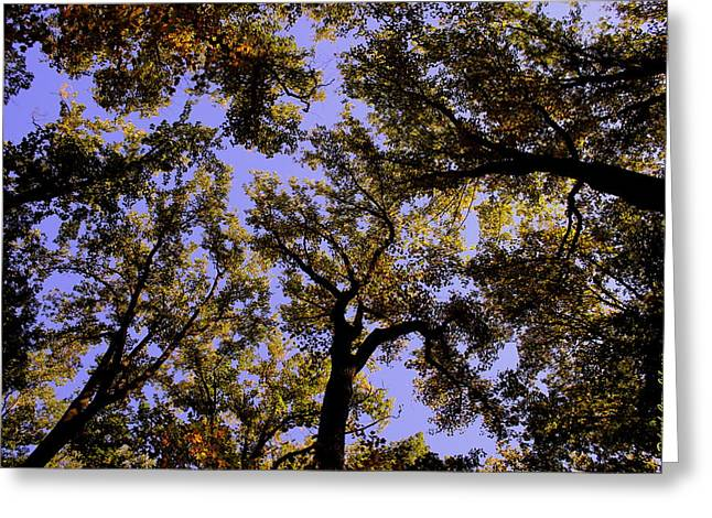 Trees Conversing Greeting Card by Deborah  Crew-Johnson