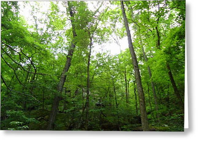 Best Sellers -  - Devils Den Greeting Cards - Trees in Devils Den  Greeting Card by Allison Jones
