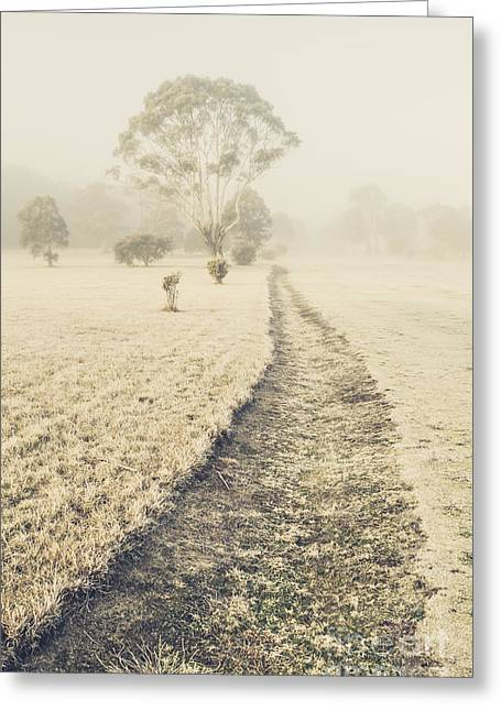 Trees In Fog And Mist Greeting Card by Jorgo Photography - Wall Art Gallery