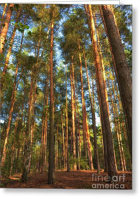 Trees In Autumn Greeting Cards - Trees in the forest Greeting Card by SK Pfphotography