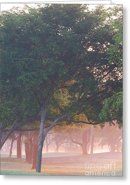 North Fork Digital Greeting Cards - Trees in the mist at Sunrise Greeting Card by Anahi DeCanio - ArtyZen Studios