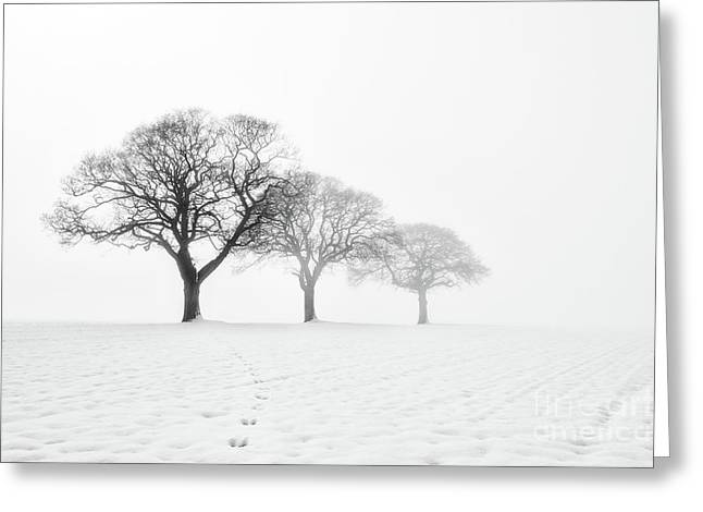 Minimalist Landscape Greeting Cards - Trees In The Mist Greeting Card by Janet Burdon