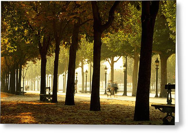 In-city Greeting Cards - Trees On Both Sides Of A Walkway Greeting Card by Panoramic Images