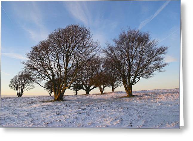 Trees On The Ring Greeting Card by Hazy Apple
